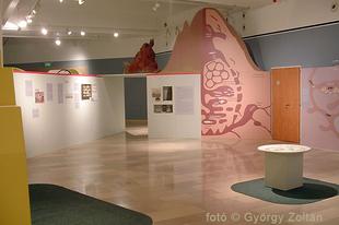 Magyar Természettudományi Múzeum: Hatlábúak birodalma rovarkiállítás 20. kép