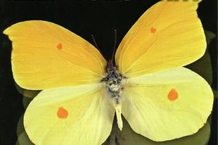 Élet és Tudomány: 2013. év rovara