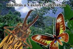 Vászolyi Nyár 2012: A rovarvilág gyöngyszemei