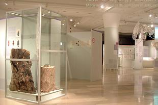 Magyar Természettudományi Múzeum: Hatlábúak birodalma rovarkiállítás 21. kép