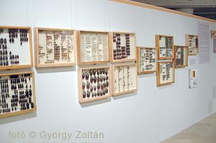 Magyar Természettudományi Múzeum: Hatlábúak birodalma rovarkiállítás 6.