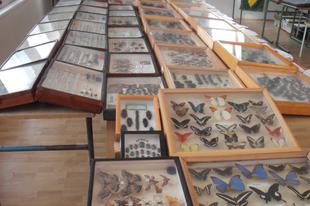 Rovarok a Drávától az Amazonasig kiállítás és a Tengerek gyümölcsei kamarakiállítás látogatható szerdától