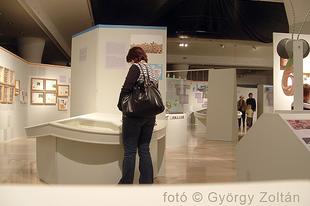 Magyar Természettudományi Múzeum: Hatlábúak birodalma rovarkiállítás 15. kép