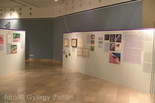 Magyar Természettudományi Múzeum: Hatlábúak birodalma rovarkiállítás 27. kép