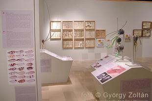 Magyar Természettudományi Múzeum: Hatlábúak birodalma rovarkiállítás 9. kép