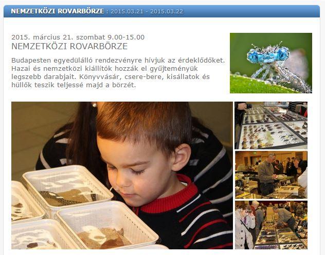 kmo_rovarborze.JPG