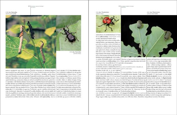Bogaraskönyv278_467_Oldal_74_web.jpg