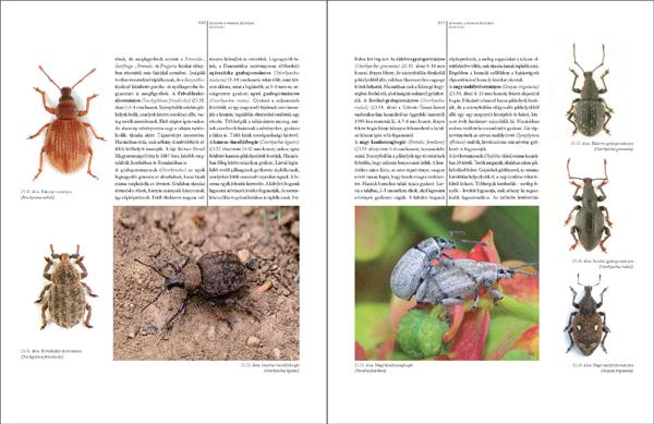 Bogaraskönyv278_467_Oldal_82_web.jpg