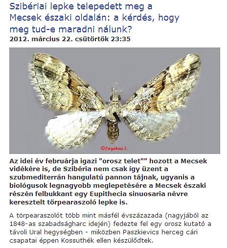 sziberiai_lepke.jpg