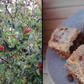 A legjobb dolog, ami az almával történhet: Emi néni féle mágnás almás pite