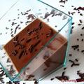 Tonka babos házi csokoládépuding
