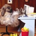húsvéti nyúl pedig van:)