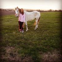 Horse capture