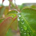 Fotózás - Esős makrók