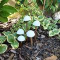 Mérges gombák inváziója