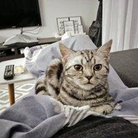 Jobbnál, jobb macskafekhelyek a legcukibb cicáknak