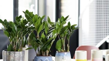 10 szobanövény, amely túléli a sötét szobában is