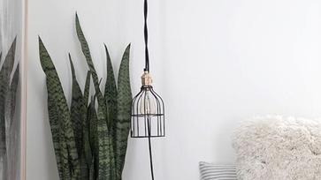 8 szobanövény, amely tisztítja a lakás levegőjét