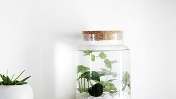 Meglepő és izgalmas trendek szobanövény fronton