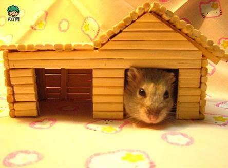 diy-hamster-house-with-chopsticks-2.jpg
