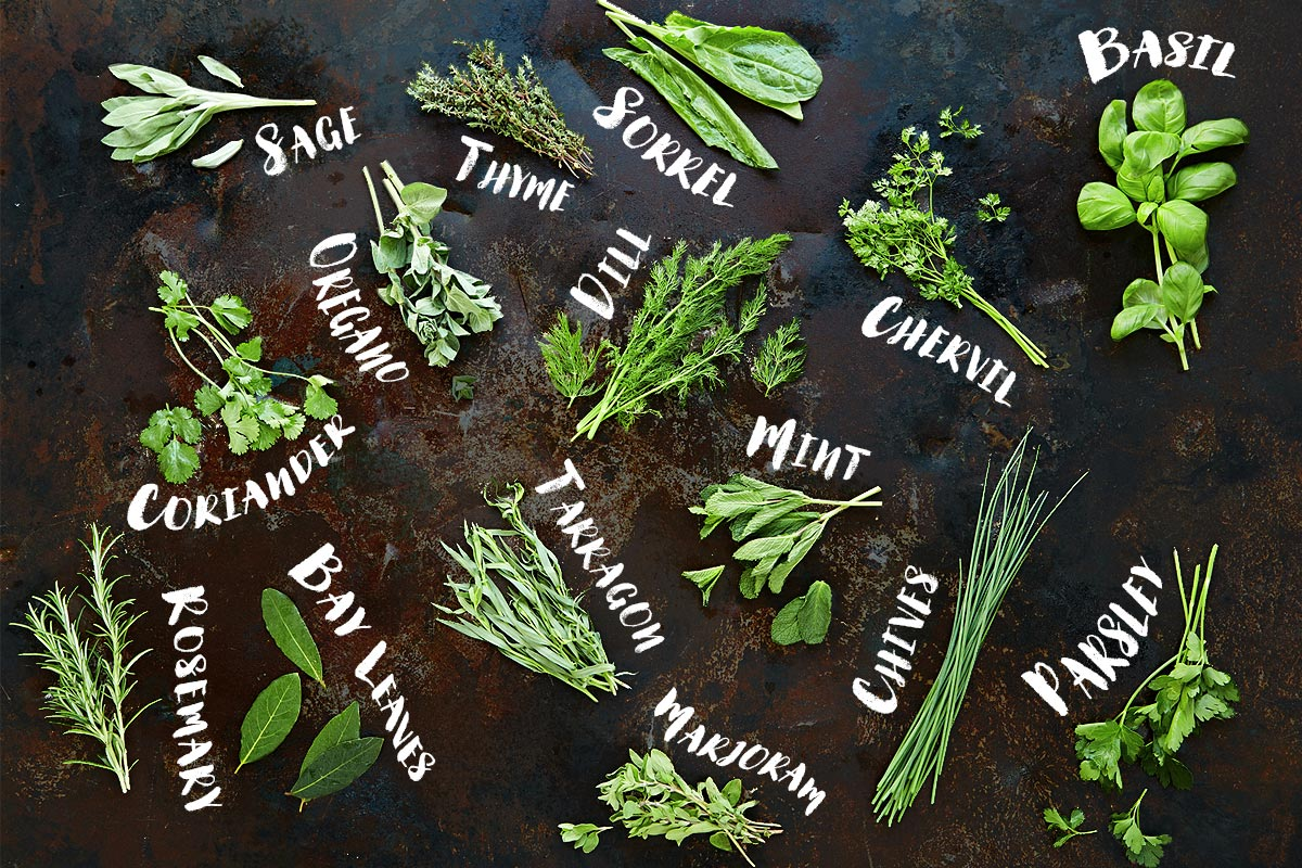herb-feature-image.jpg