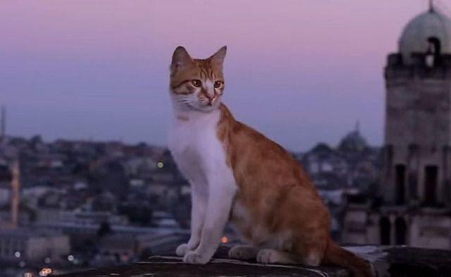 kedi-film-02.jpg
