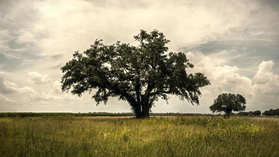 true-detective-tree.jpg