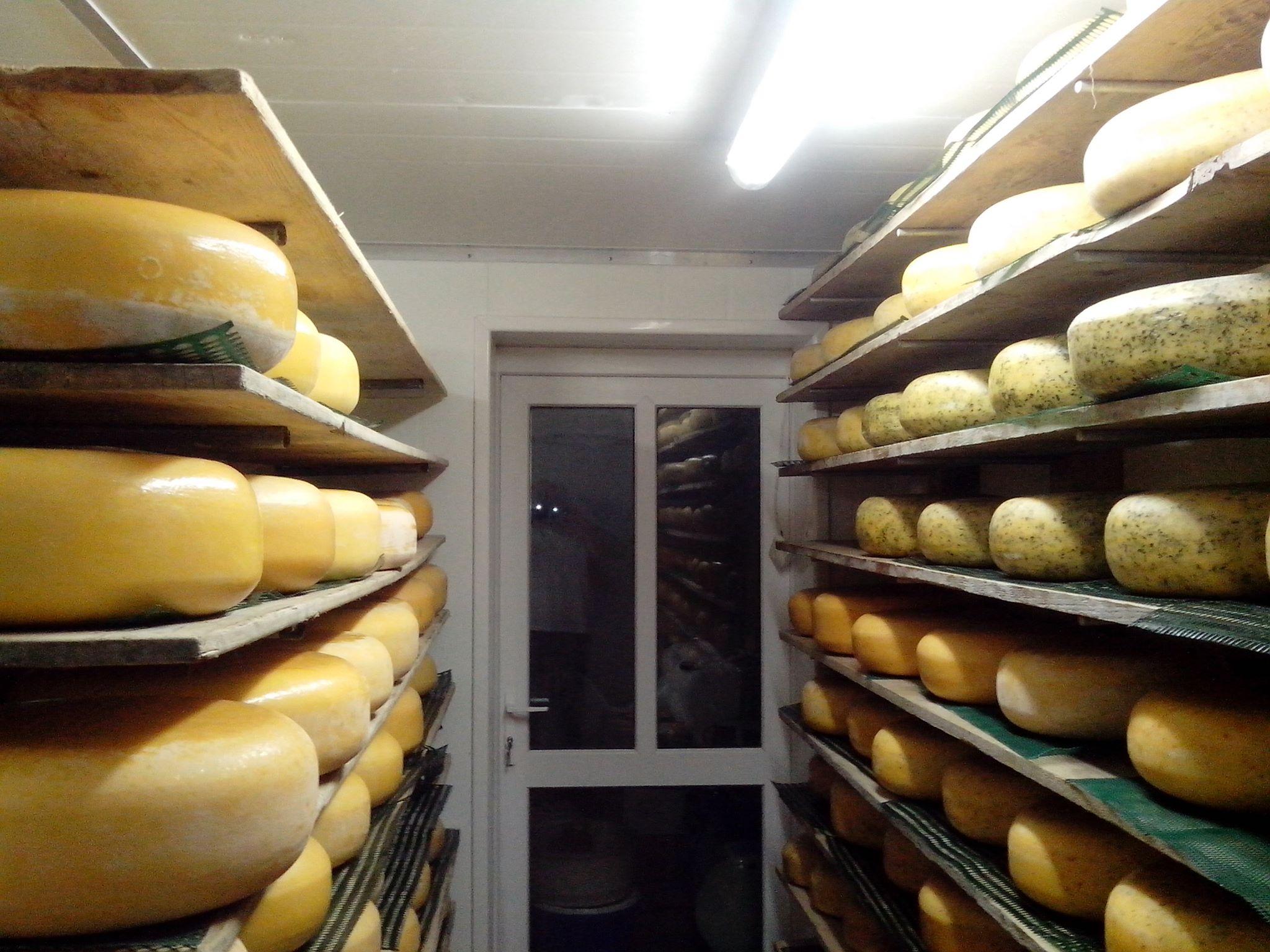 Sajtraktár Walesben, a polcokon Gouda jellegű sajtok sokasága sorakozik...