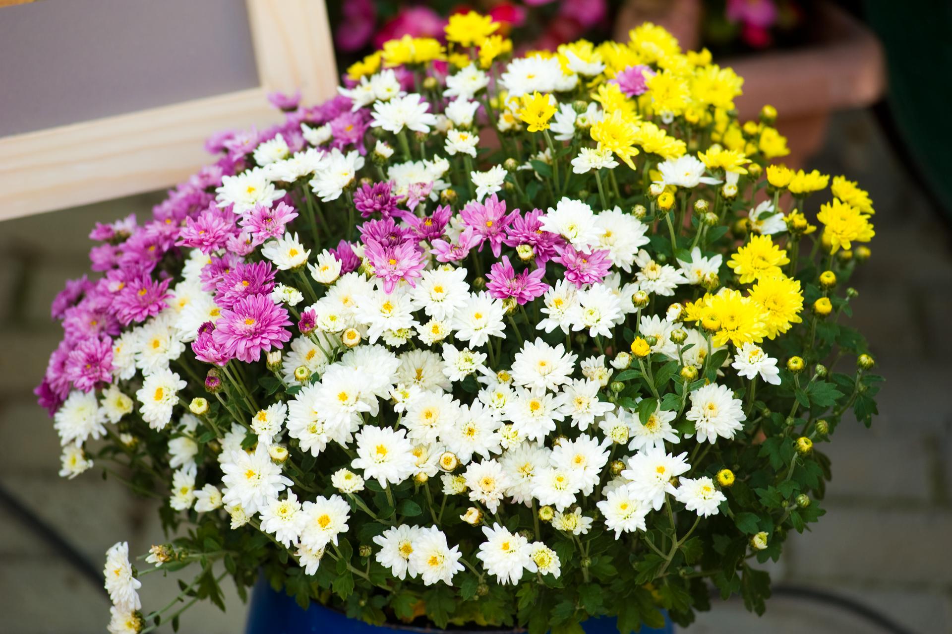 Napsütés és virágok színesítették a szombatot, mielőtt eljött volna az őszi idő.
