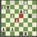Sakk - amatőröknek - sakkok szárnyán szállni élvezet