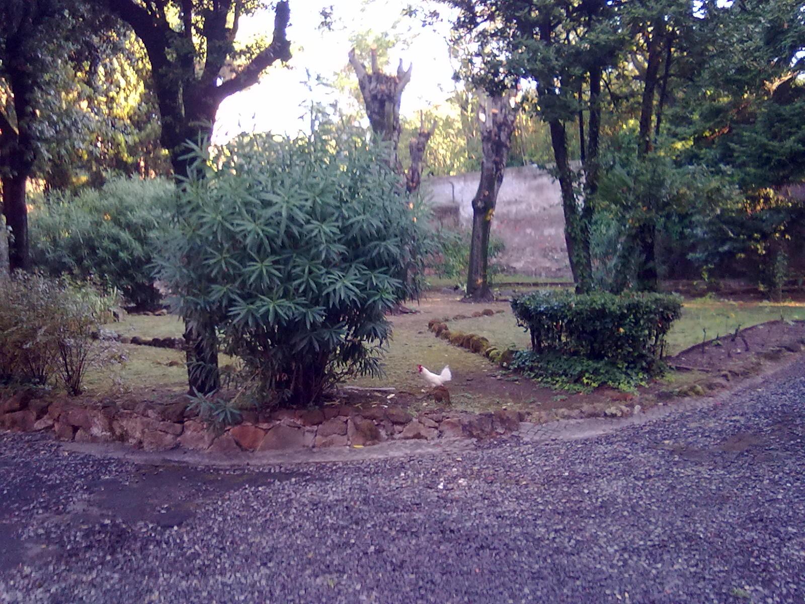 Hátsó kert
