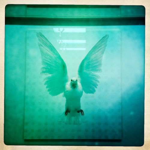 the-incomplete-truth-damien-hirst.jpg