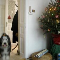 Békés Karácsonyt Mindenkinek!!!