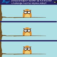 Élvezzük együtt ezeket az ice bucket challenge mentes képkockákat!