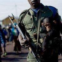 Jobb napot, Kongó!