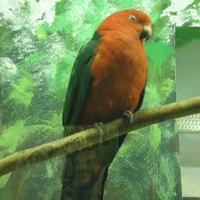 Kolbenheyer ír 46.: Papagáj
