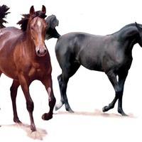 A társadalom két lova