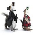 Egyben nyelte le a mókus az üveget!