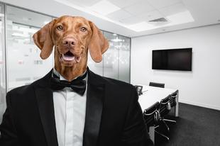 Menő irodák, ahová még a kutyádat is viheted!