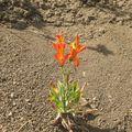 Tudta, hogy Szent Márton nevét egy virág is viseli?