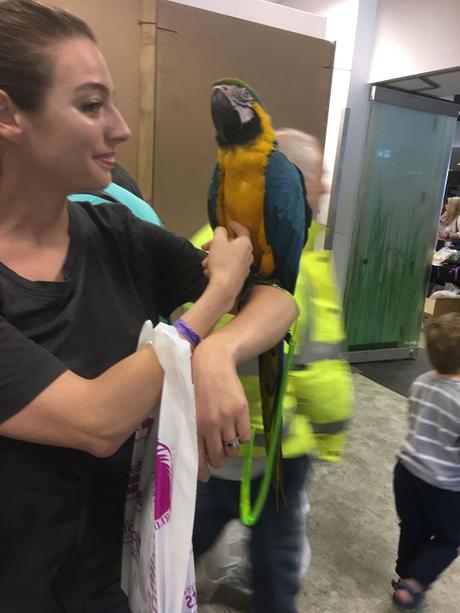 blog_think_parrots-2.jpg