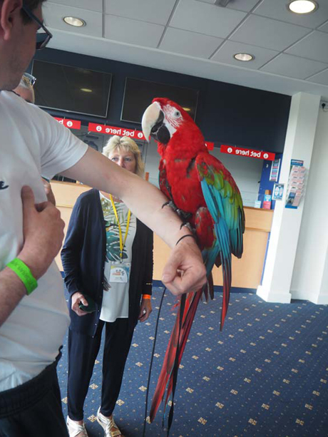 blog_think_parrots-4.jpg