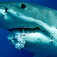 A cápák lehetnek rákosak, a csupasz turkálók nem - Dr. James S. Welsh könyvének bemutatása