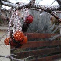 Téli bogyók