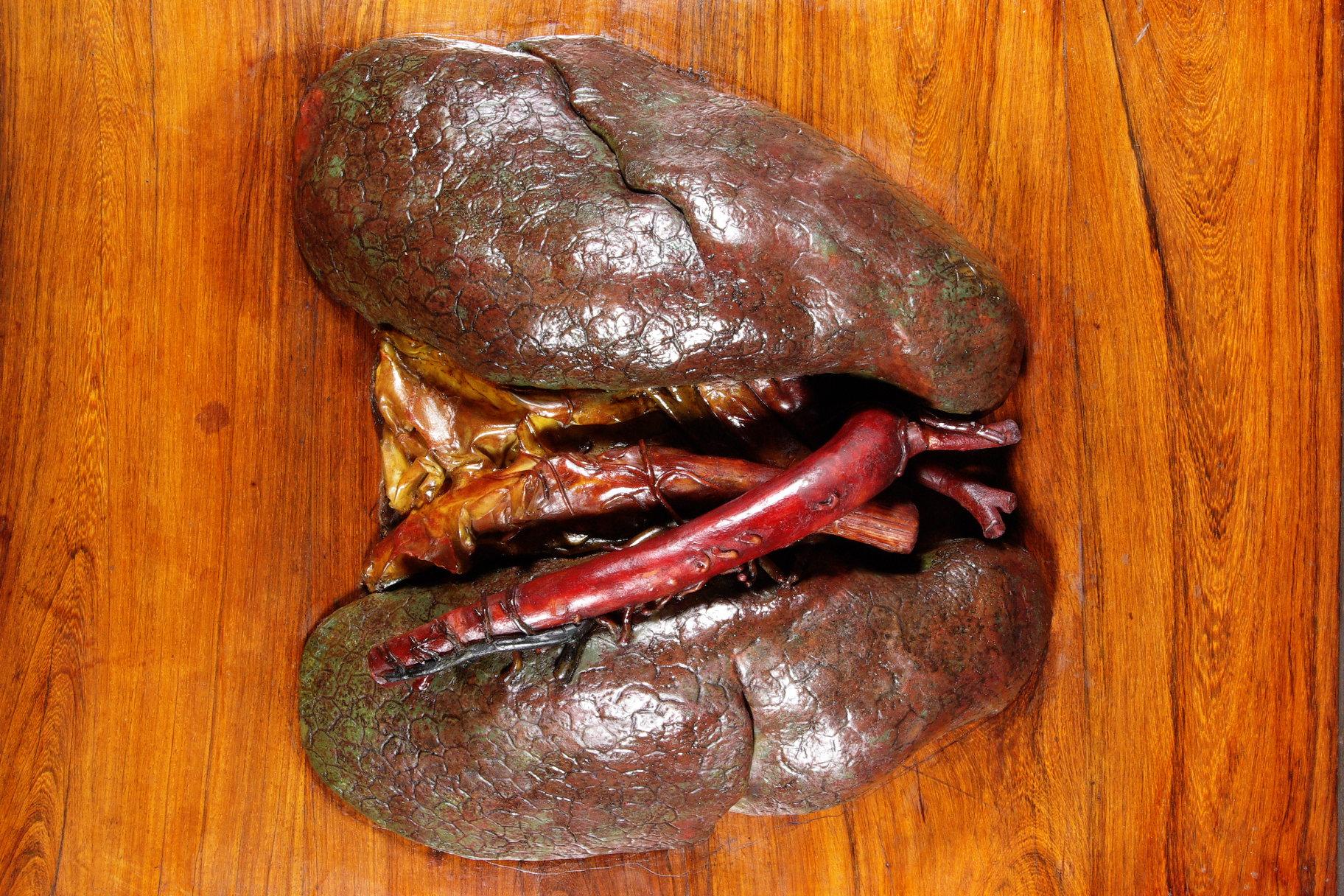 Anatomia artificialis
