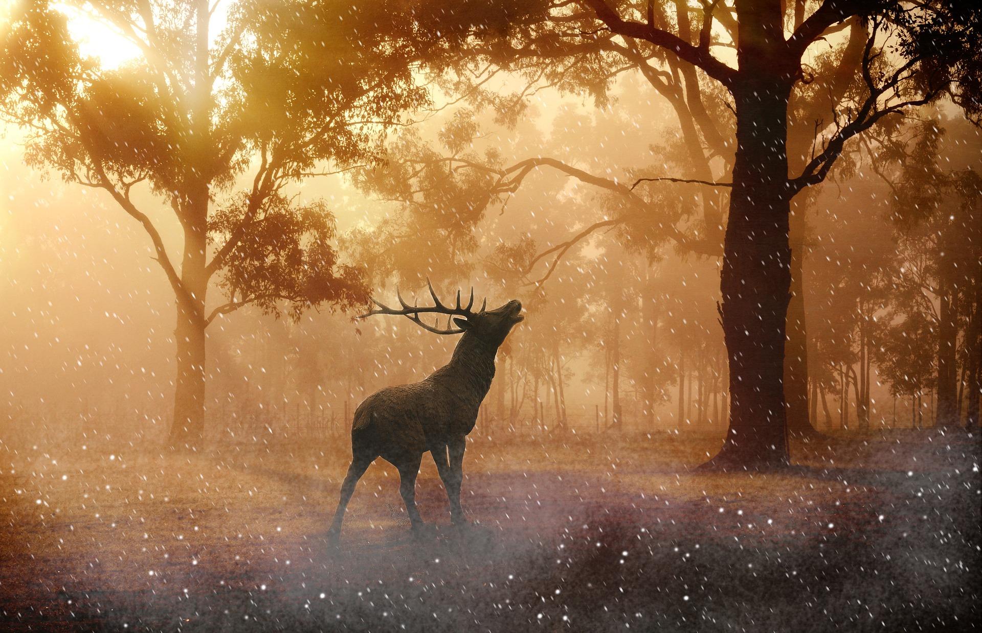 deer-643340_1920.jpg