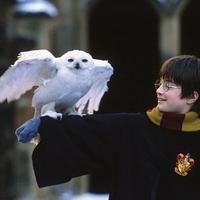 Harry Potter - Hóbagoly