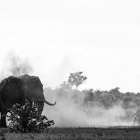 Elefánt a porcelánboltban