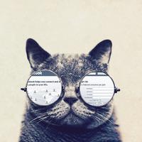 A macska tudja csak a nagy titkokat?