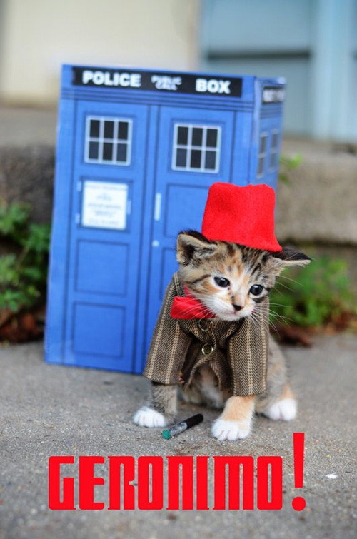 doctor_who_kitten_01.jpg